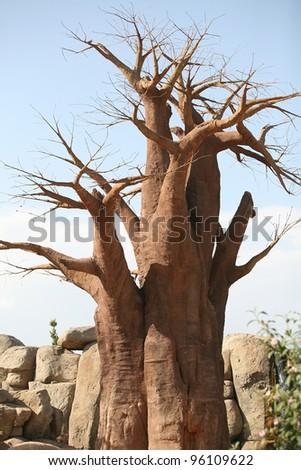 Baobab trees in Biopark Valencia - stock photo