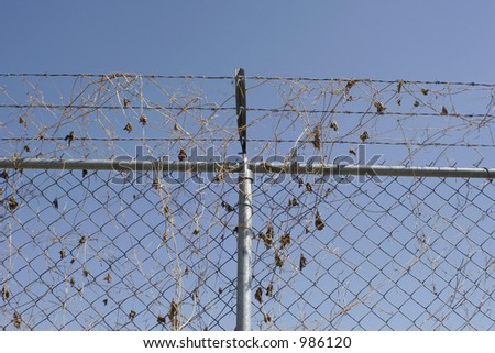 Barb wire fence with dry leaves - stock photo