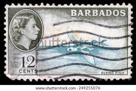 BARBADOS - CIRCA 1954: A stamp printed in Barbados shows flying fish and portrait of Queen Elizabeth II, circa 1954 - stock photo