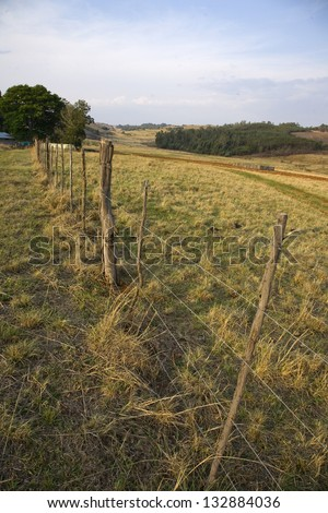 Barbed wire fence with wooden posts in a grassy meadow on a farm in Mpumalanga, South Africa - portrait orientation - stock photo