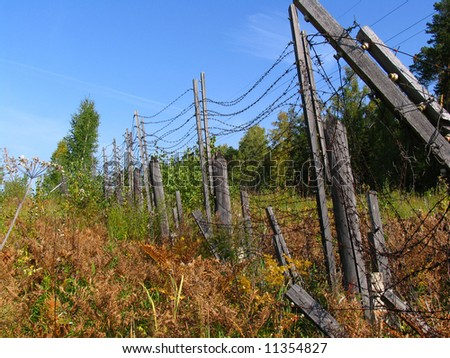 Barbed wire of the thrown zone. Early autumn.
