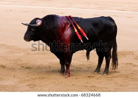 "BARCELONA - JUNE 6: ""Corrida"" (bullfighting) of bulls, typical Spanish tradition where a torero (bullfighter) kills a bull. In the picture, an injured bull. June 6, 2010 in Barcelona (Spain). - stock photo"