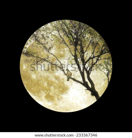 Bare branches and bird with full moon - stock photo