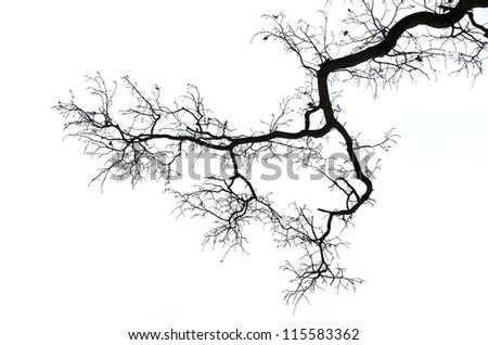 Bare branches isolated on white background - stock photo