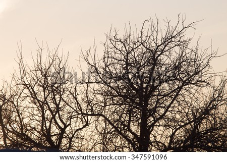 bare branches of a tree at sunrise sun - stock photo