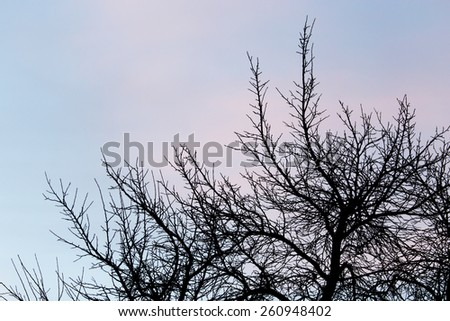 bare branches of a tree at sunset - stock photo