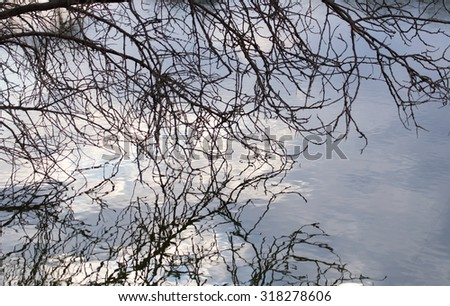 bare branches of trees with reflection on the surface of the water