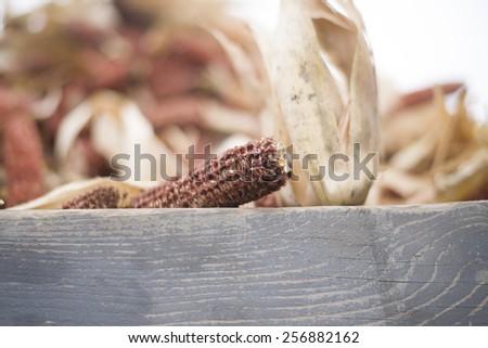 bare corn cob - stock photo