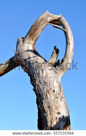 bare tree branch on a background of blue sky