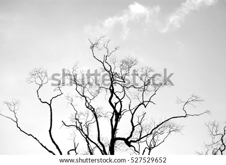 Bare tree branches