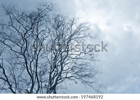 Bare tree branches silhouette in the cloudy sky - stock photo