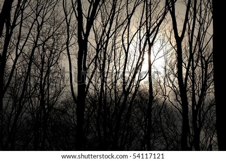 Bare tree branches with fading sun behind them - stock photo