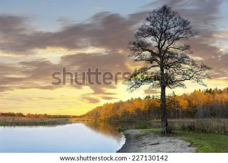 bare tree by scandinavian river at sunset in autumn - stock photo