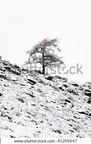 Bare tree in a snowstorm - stock photo