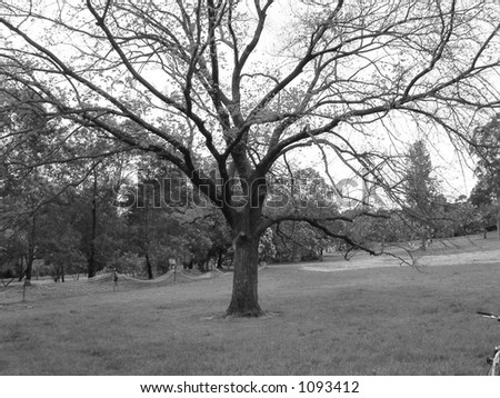 bare tree in park - stock photo