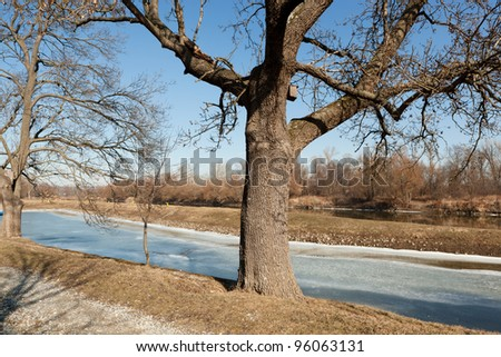 Bare tree on a winter day on the river bank