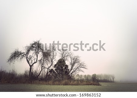 Bare trees in field on gloomy autumn or winter day