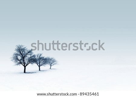 Bare trees in snow - stock photo