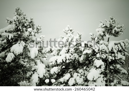 Bare trees in snow at winter - stock photo