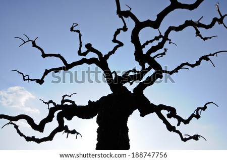 bared tree against blue sky background - stock photo