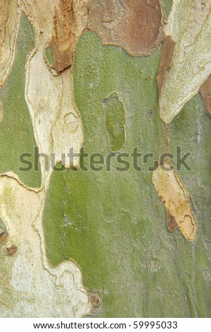 Bark  background - stock photo
