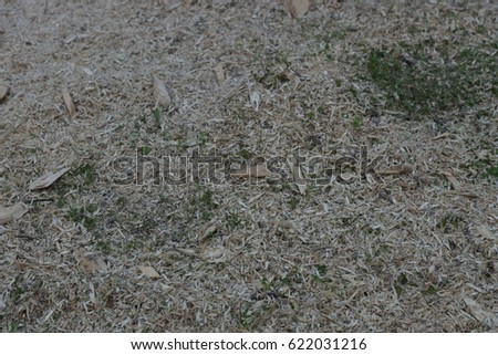 bark chips as ground cover