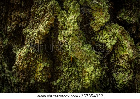 bark in moss, closeup - stock photo