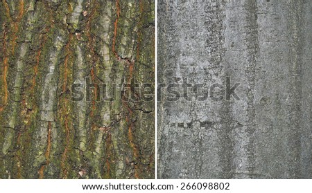 bark oak and hornbeam trees background, texture - stock photo