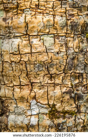 Bark of Cycad - stock photo