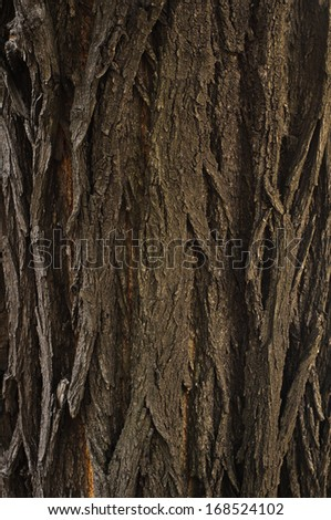Bark of oak tree textured surface with small details - stock photo