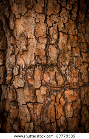 Bark of Pine Tree - stock photo
