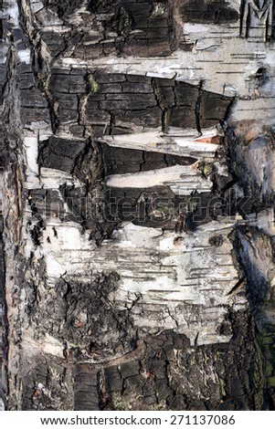 bark of the tree is photographed close up
