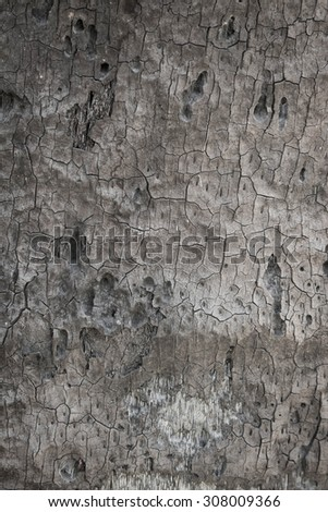 bark of tree texture  - stock photo