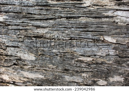 bark of tree texture/tree bark background - stock photo