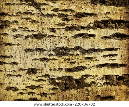 Bark of tree. Wood texture, Old Wood Tree Texture Background Pattern, birch - stock photo