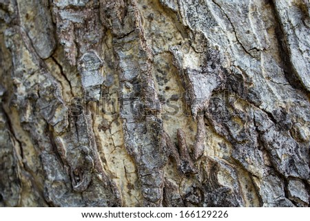 Bark of trees in the forest