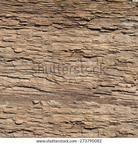 bark old tree. wood texture - stock photo
