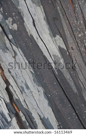 Bark on a tree in Mt Buller during the snow season - stock photo