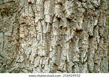 Bark texture background pattern crack old brown for design - stock photo