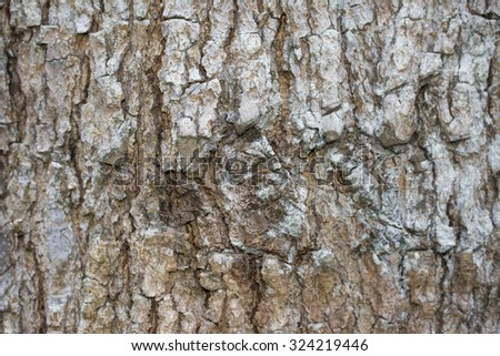 bark texture,bark pattern - stock photo