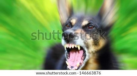 Barking enraged shepherd dog outdoors over blurred green background - stock photo