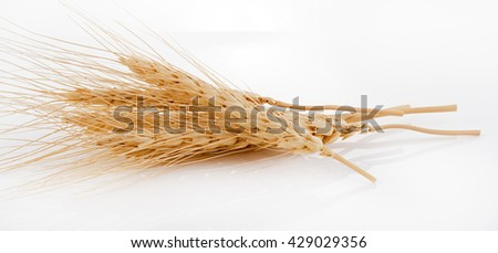 Barley Grains the scoop Isolated on White Background