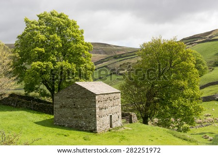 Barn and two trees in the Yorkshire Dales