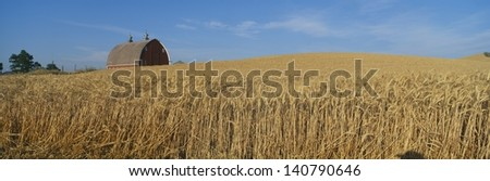 Barn and wheat field in South East Washington - stock photo
