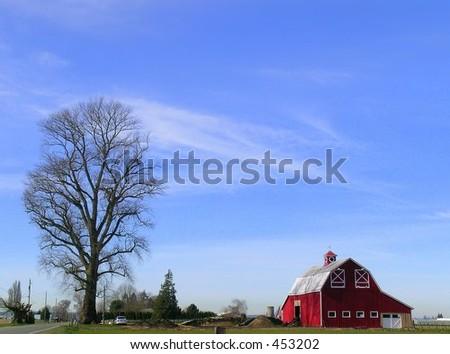 Barn, big, red, with Huge stark tree - stock photo