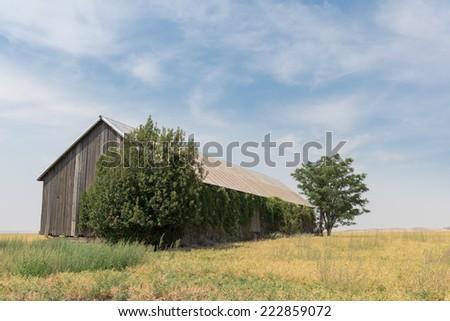 Barn on a farm in wheat fields near Walla Walla in eastern Washington - stock photo