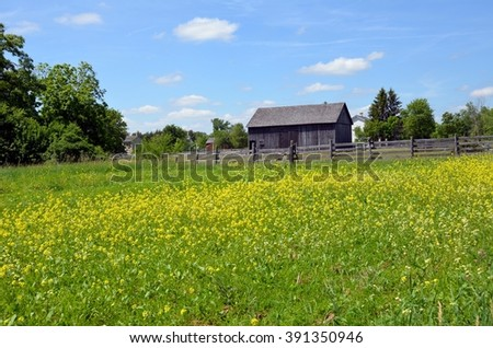Barn with fence in mustard field