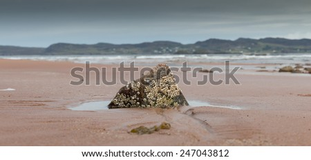 Barnacles on a rock at the quiet Cove Beach, Scotland - stock photo