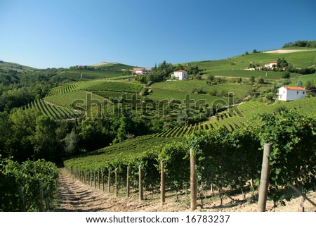 Barolo wineyards against blue sky. Typical Italian landscape. - stock photo