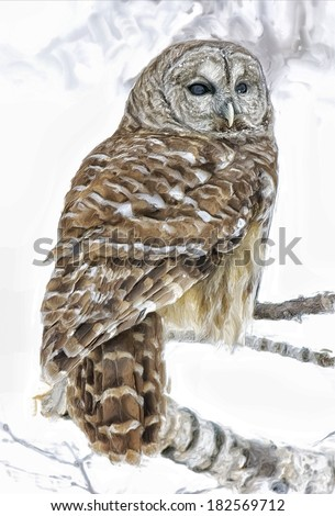 Barred owl on roost in winter - stock photo